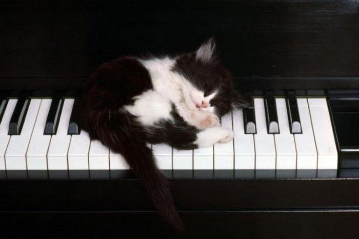 Музыка спит...