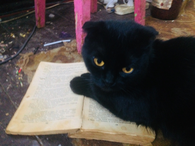 Кошка читает книжки )))