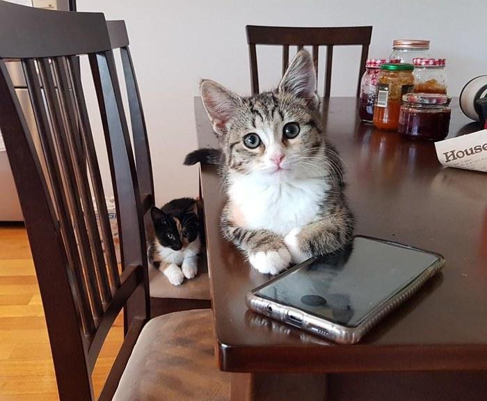 Коты - дай пожрать