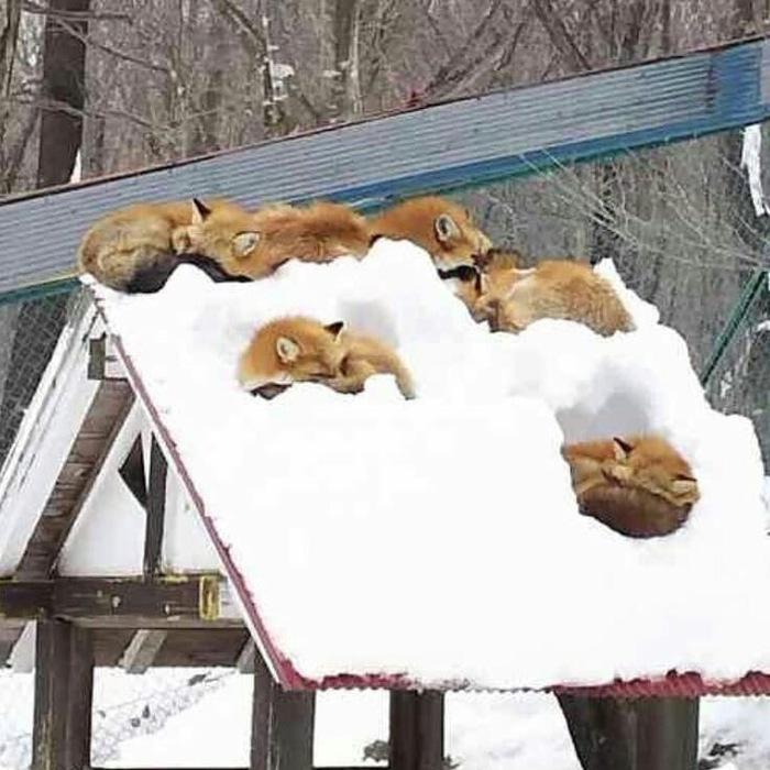 Возможны осадки в виде лис .