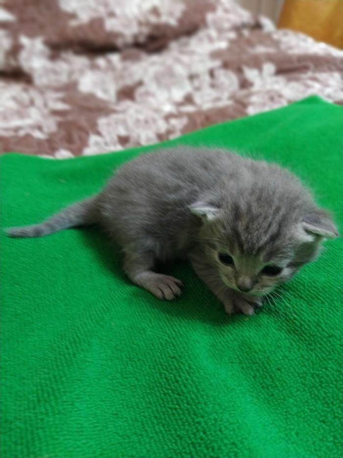 Трехнедельные котята фото