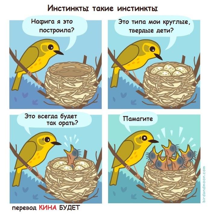 Про птичек и не только...