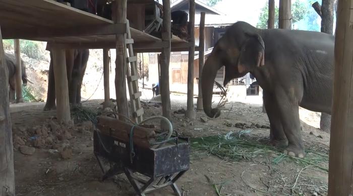 Десятки слонов в Таиланде почувствовали настоящую свободу