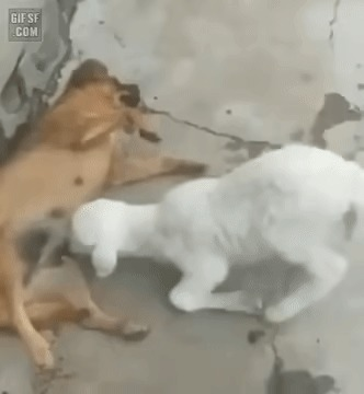 Не мешай мне есть, собака