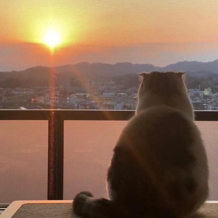Невыносимое желание сидеть и наслаждаться закатом где-то далеко, а не это вот всё