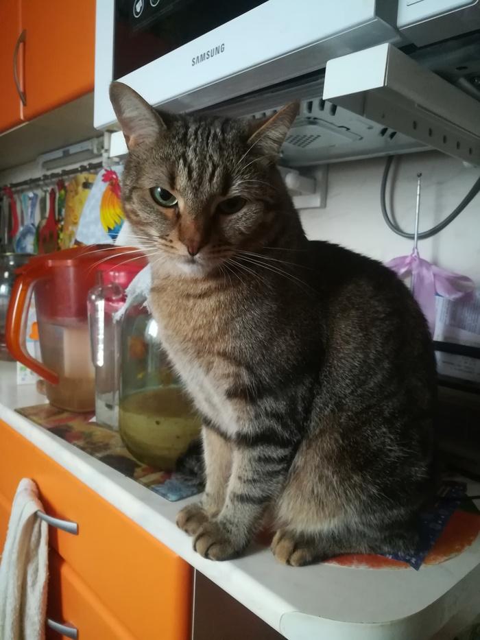 А вот вам котик. Его зовут Кузя)Подобрали в 2017, маленьким, тощим и голодным)