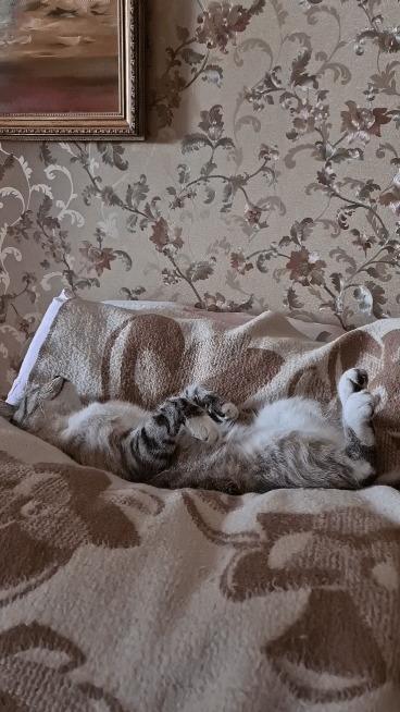 Котиша. Длиннопост Кот, Гифка, Длиннопост, Собака, Животные, Это фиаско братан!