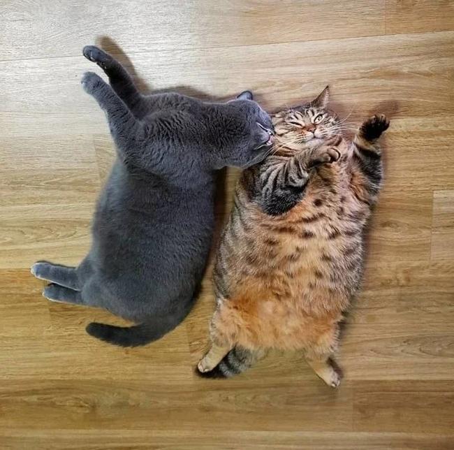 Один кот хорошо, а два лучше...