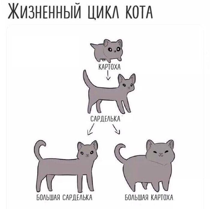 Жизненный цикл кота