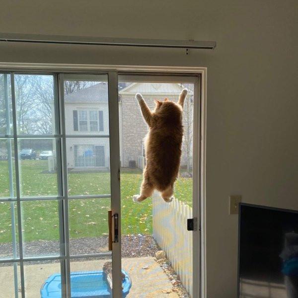 Даёшь свободу честным котам