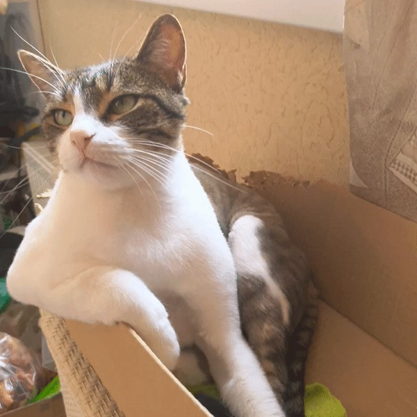 Очень важный котик Кот, Дзен, Гифка