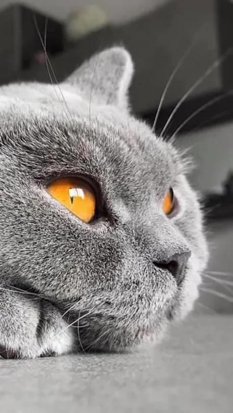 Эти глаза...они прекрасны, как и сам котейка!