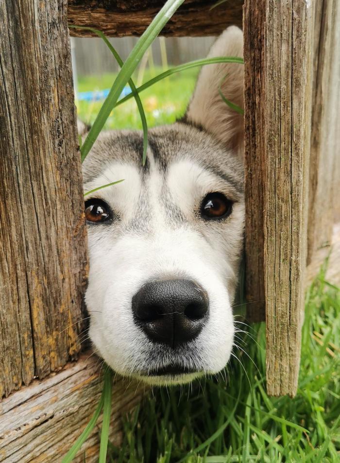 Привет, сосед!