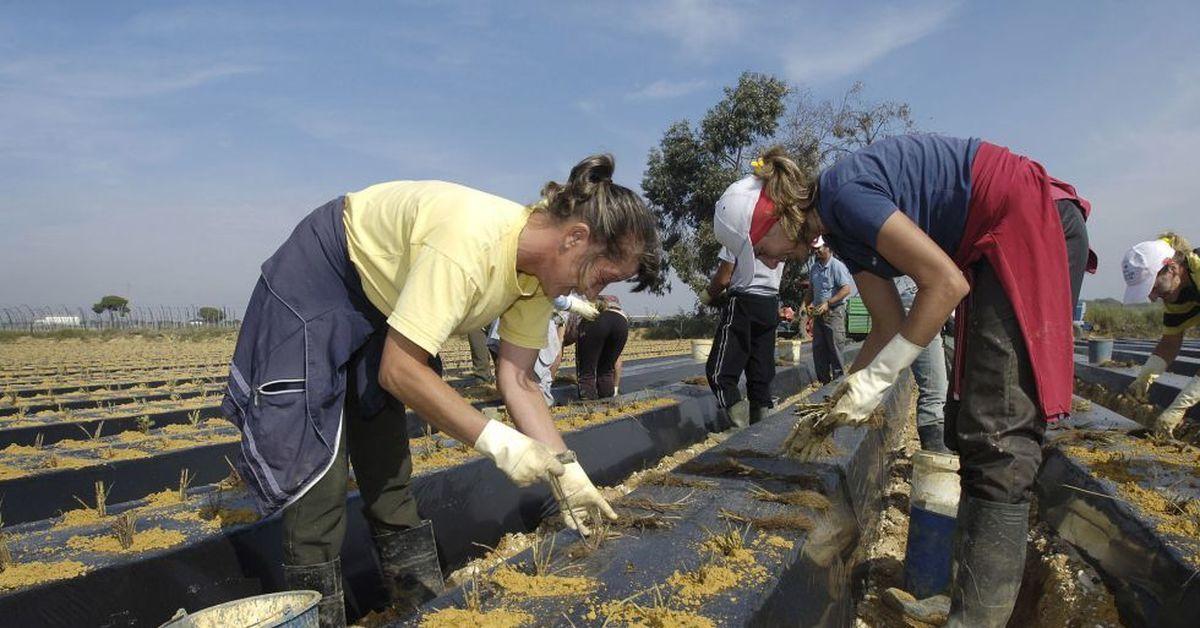 Сезонная работа в испании 2017 дома в море в дубае