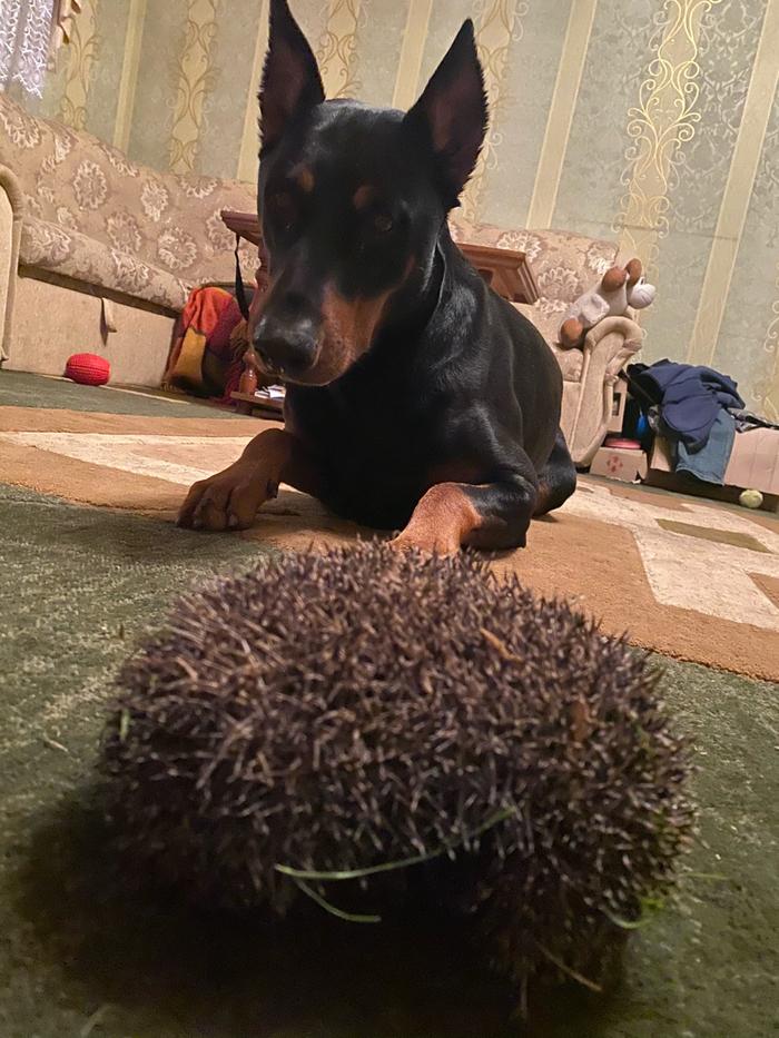 Собакен и ёжик