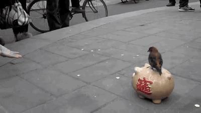 Прикольная птаха :) Птицы, Копилка, Гифка, Деньги, Из сети, Дрессировка