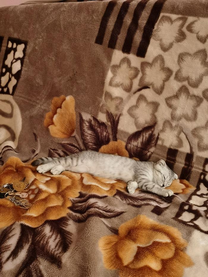 Охота на плюшевую мышь