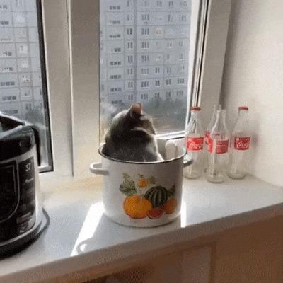 У вас там кот закипает, с солнца уберите