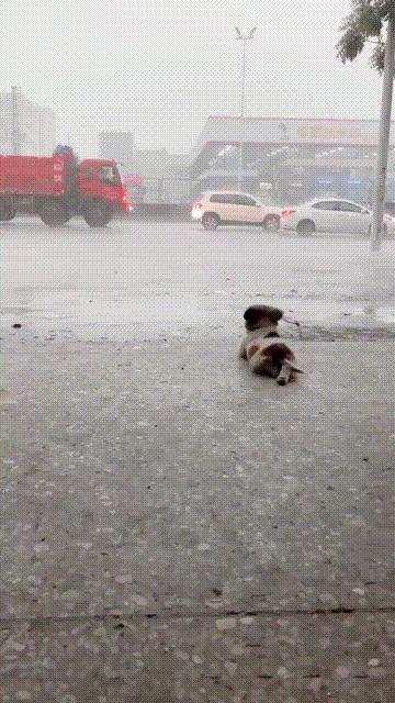 Этот малыш любит выходить на улицу и просто смотреть на дождь