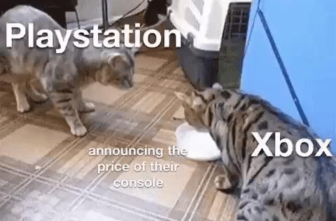 Sony и Microsoft никак не решаются анонсировать цены на консоли Гифка, Microsoft, Sony, Кот, Playstation 5, Xbox Series X
