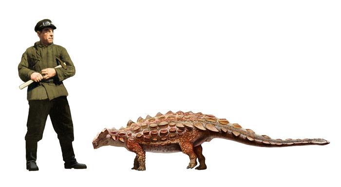 У анкилозавров биссектипельт была холодная голова и острый нюх Палеонтология, Наука, Динозавры, Копипаста, Elementy ru, Гифка, Длиннопост