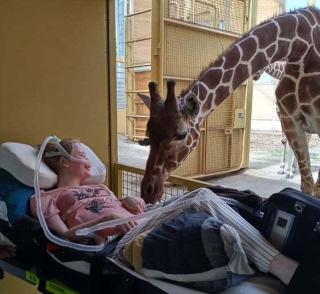 Жираф передал привет