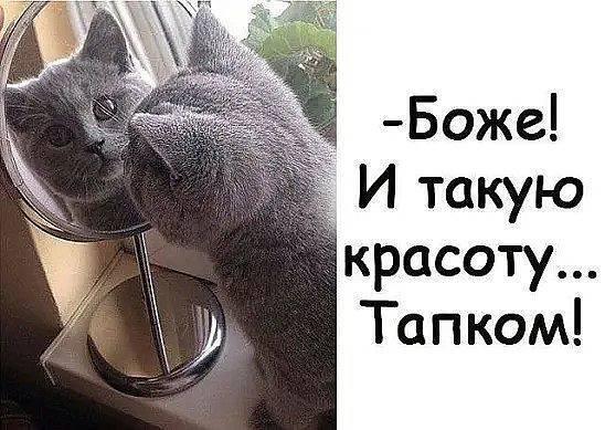 Главное принял боевую позу))