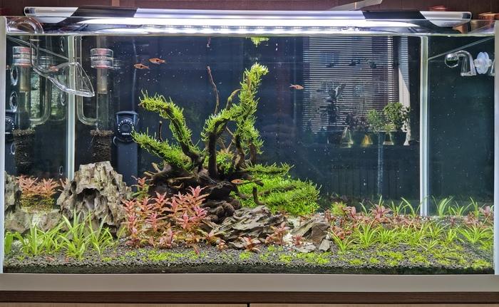 Мой аквариумный мир