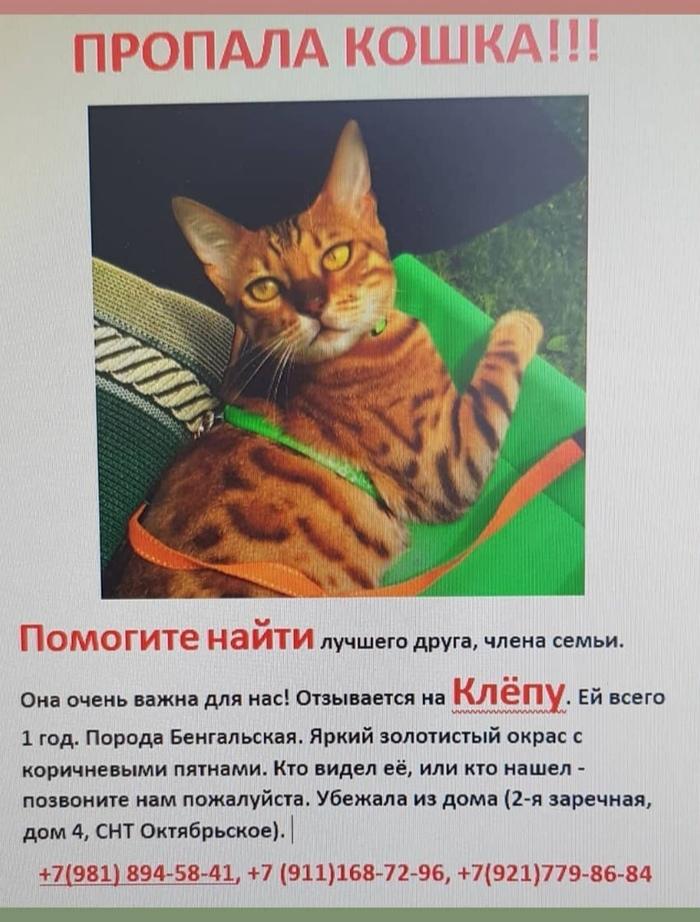 Пропала кошка!!! Лен. Обл. Снт Октябрьское