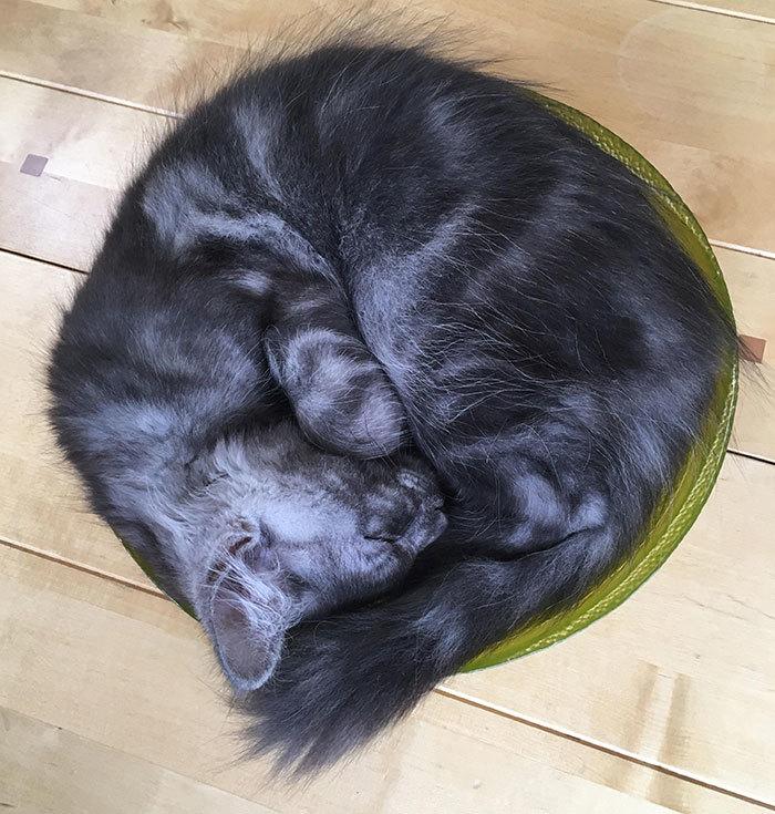 Уютная форма кота...