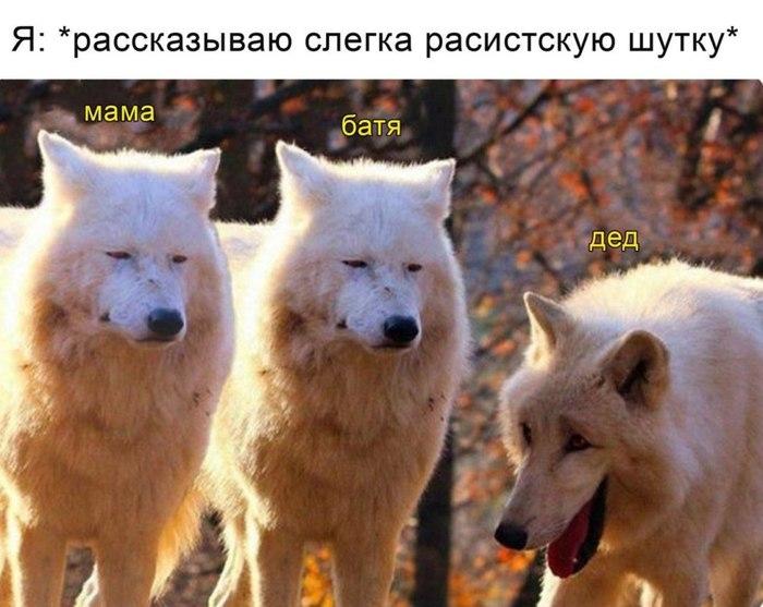 Ответ на пост Волки
