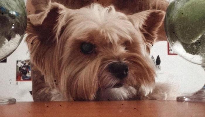 Радости стало слишком много: почему толстые котики и собаки — не мило, а печально Длиннопост