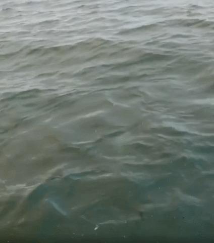 Рыбачишь такой себе спокойно и вдруг...