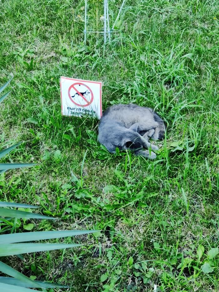 Спящие коты, таймлапс