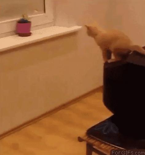 Прыжок: ожидание и реальность Кот, Прыжок, Рысь, Fail, Это фиаско братан!, Гифка, Ожидание и реальность