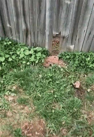 Лучший сосед