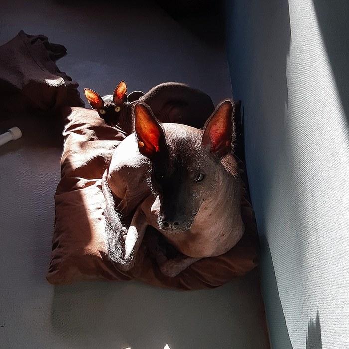 Солнечные ушки