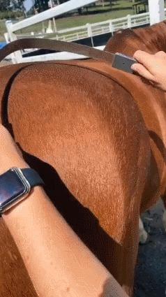 Уход за лошадками