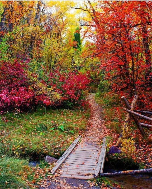 Осенние краски Осень, Природа, Цвет, Красивое, Времена года, Длиннопост, Красота природы