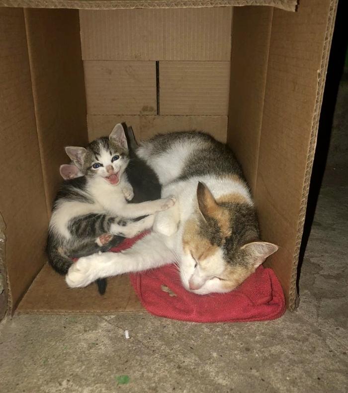 Кошка с котятами стала неугодной и её выкинули на улицу. Очередной безответственности пост