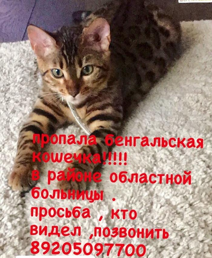 Помогите найти !потерялась бенгальская кошка , город Липецк