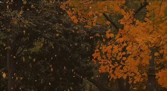 Здравствуй, Рыжая. Бессмысленной милоты пост Фотография, Осень, Животные, Природа, Кот, Собака, Лошади, Настроение, Милота, Гифка, Длиннопост