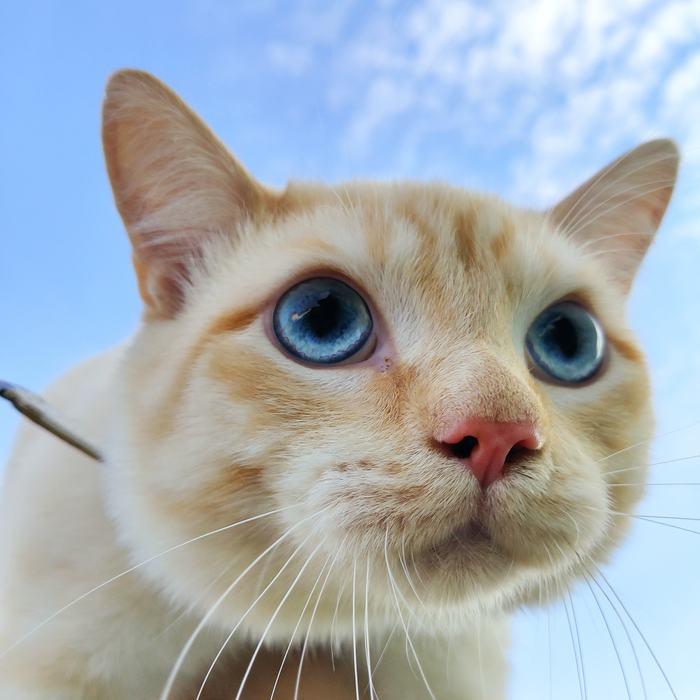 Гуся - пятничный кот