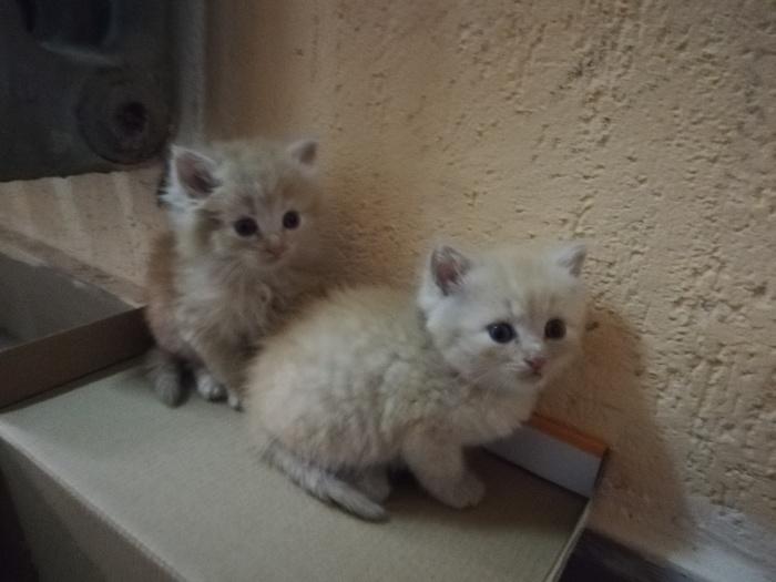 Котята-подкидыши