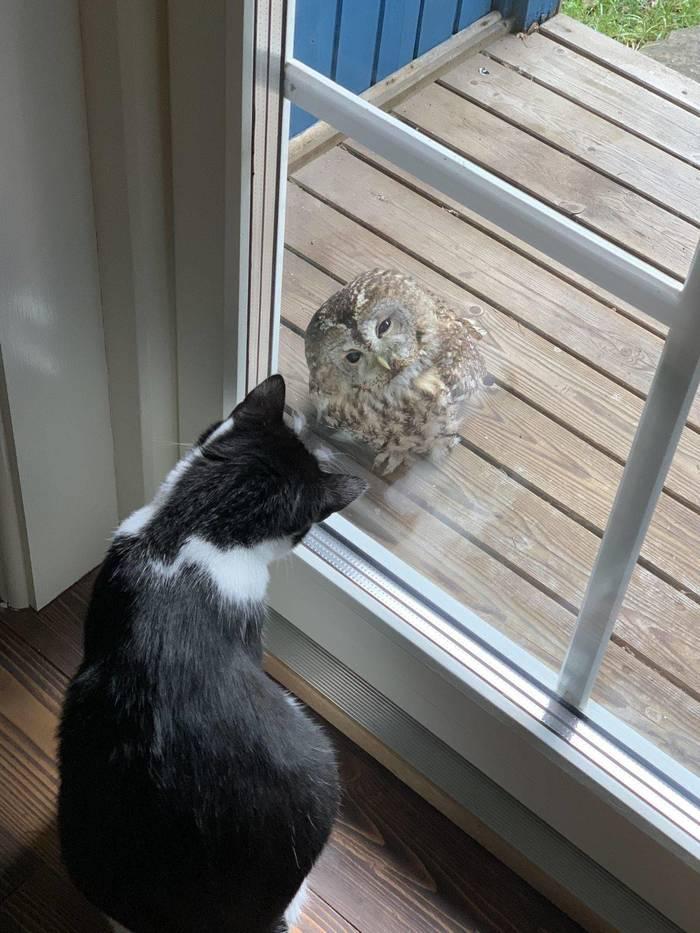 А не кот ли ты часом ?
