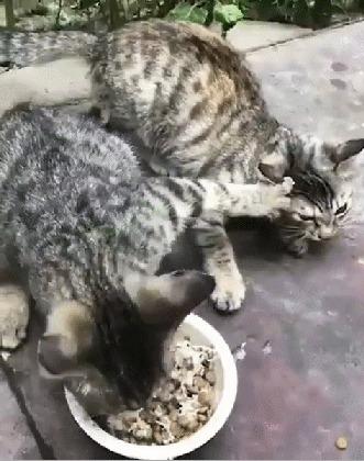 Моя еда!