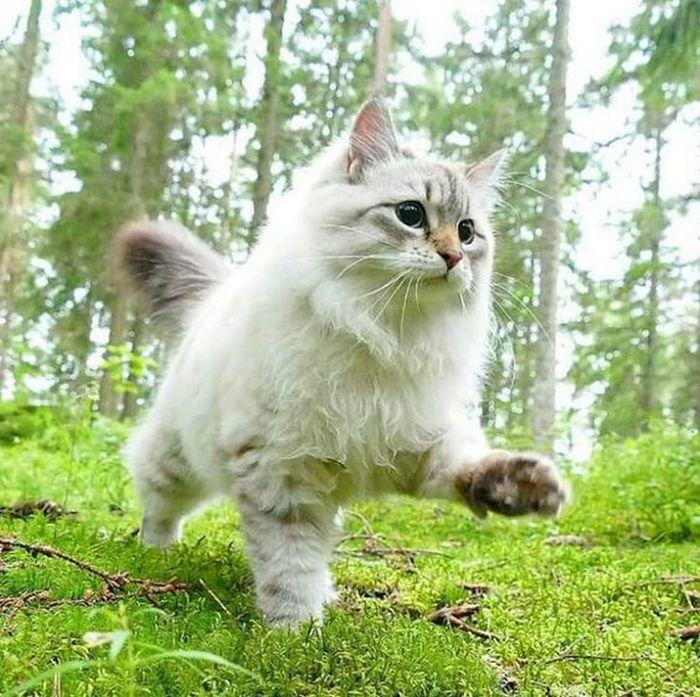 Трепещи лесной житель! Я иду...