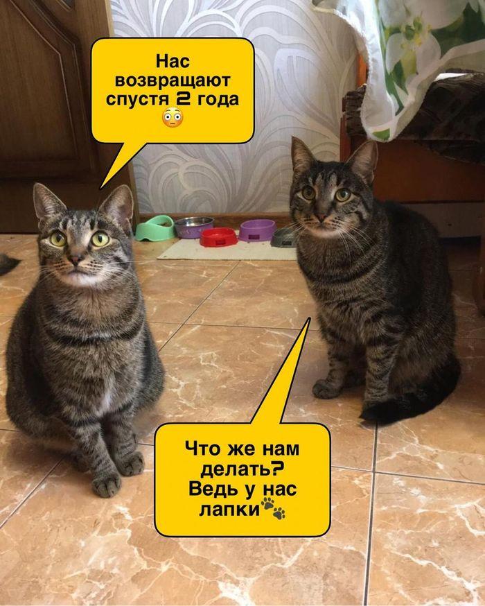 Рожденные бездомной кошкой малыши нуждаются в доме, Луганская область