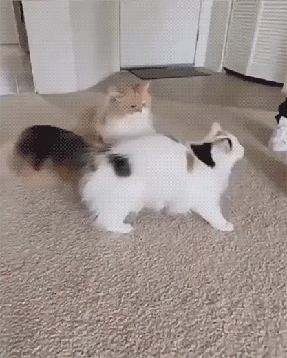 Котики развлекаются