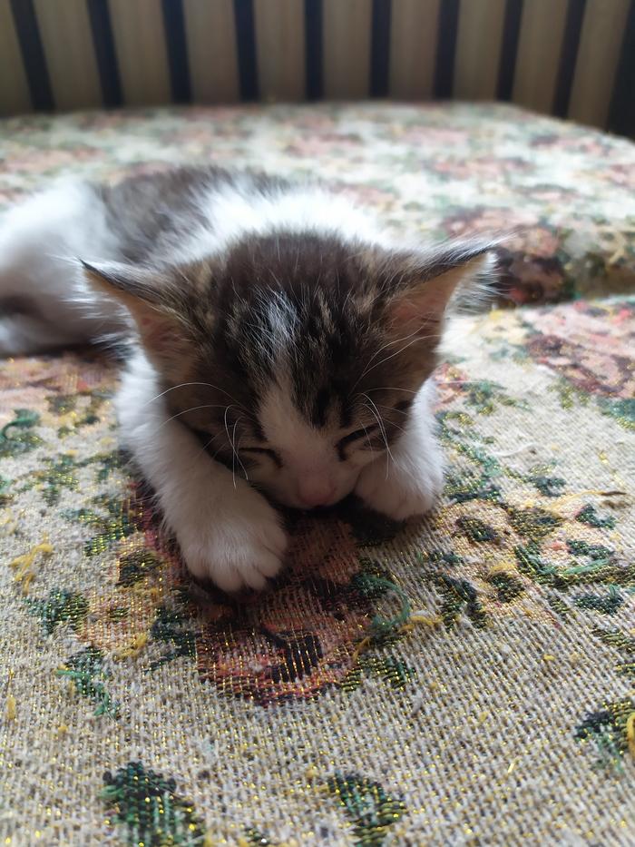 Маленьким котятам очень нужен дом! Луганская область и вся Украина